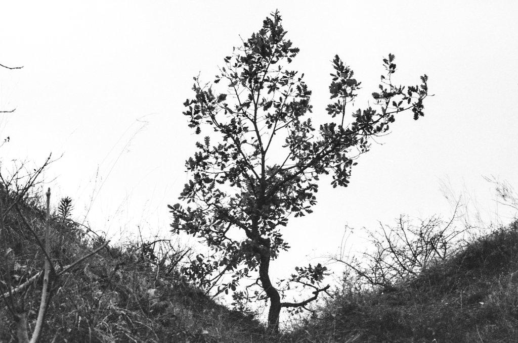 nature-1-of-4.jpg