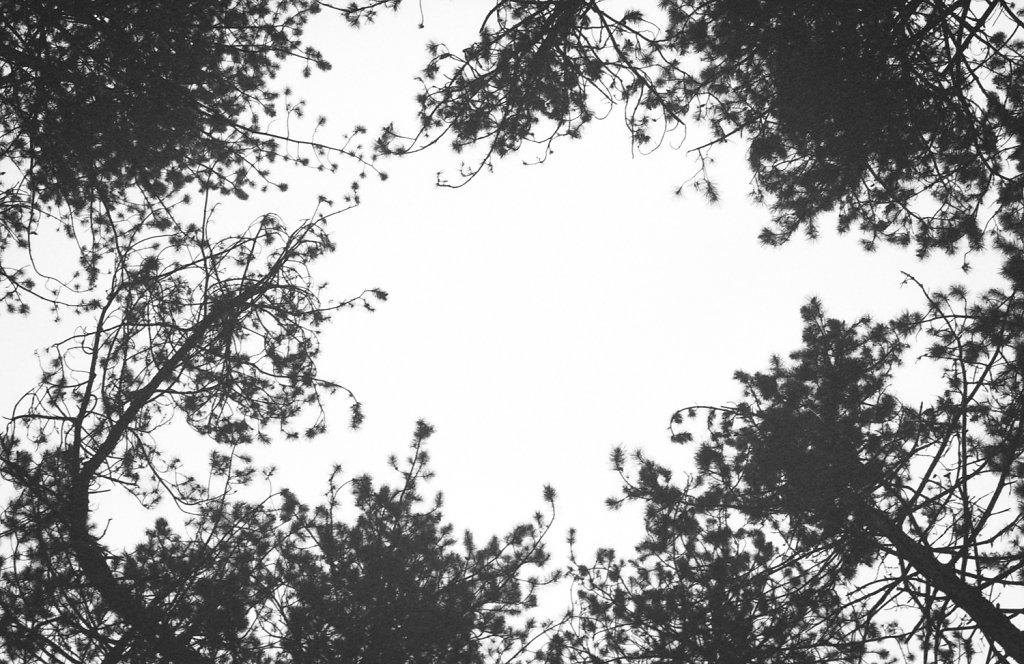nature-7-of-1.jpg